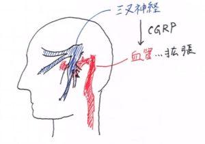 三叉神経説