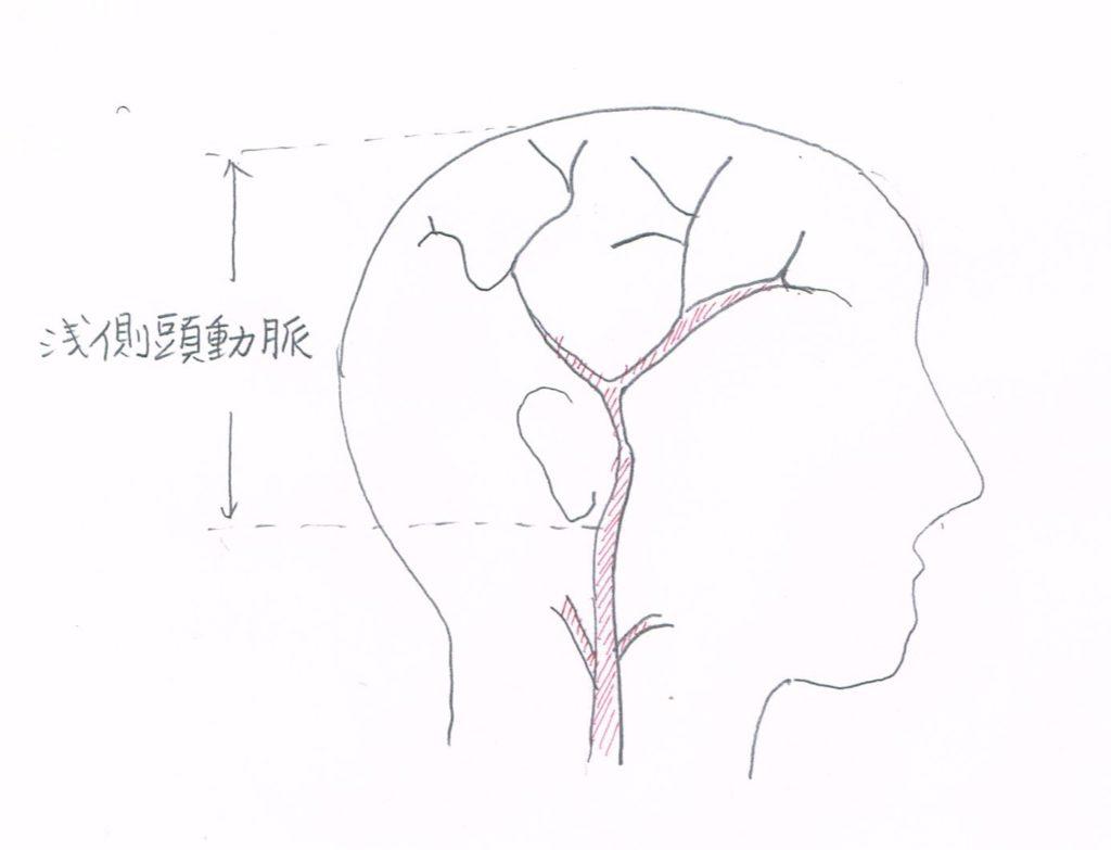 浅側頭動脈を描いた側頭部の図