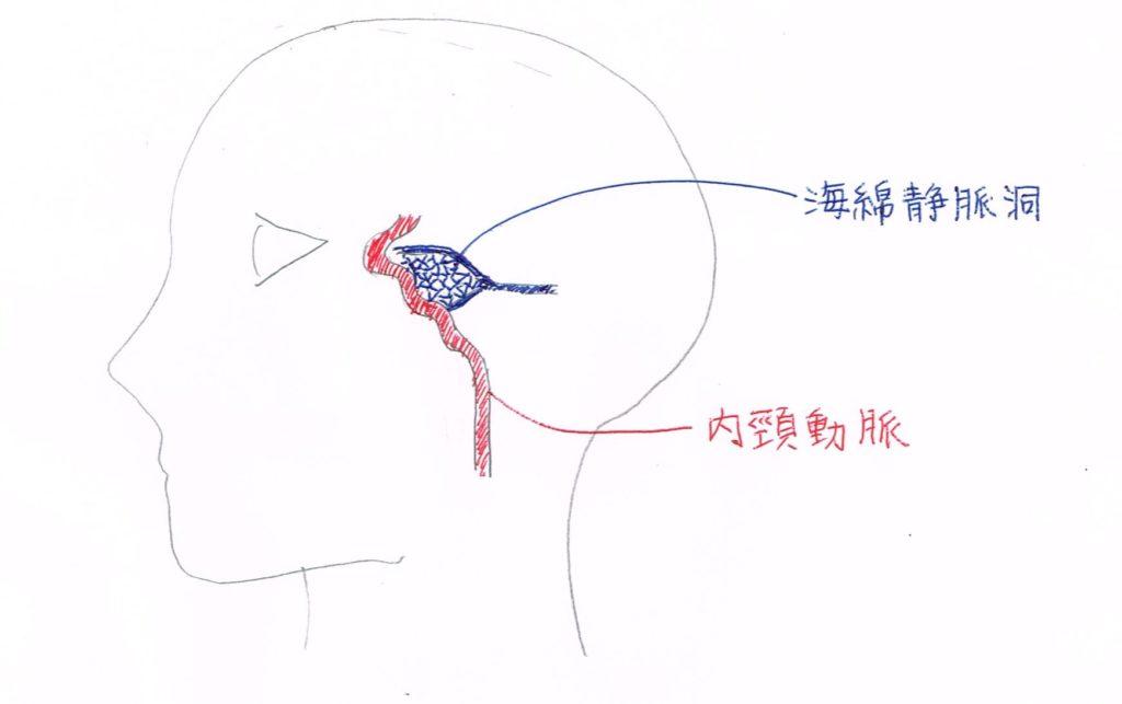 眼の奥の動脈・静脈