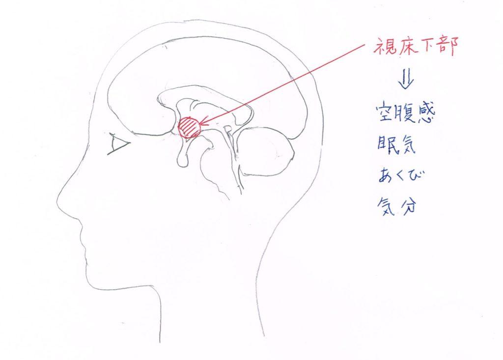 視床下部がつかさどる様々な身体機能