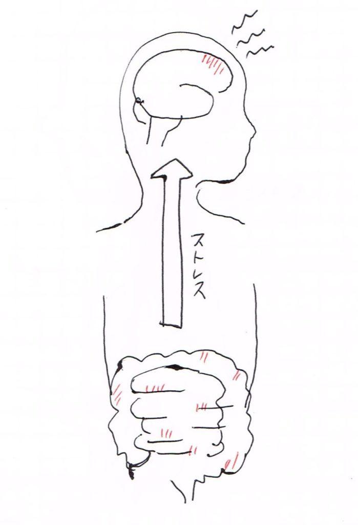 腸から脳へのストレス